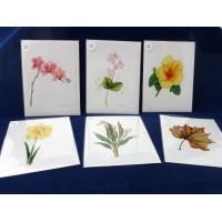 Note Cards by Victoria A. Kochergin